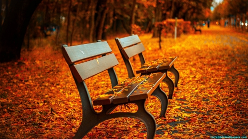 Colorful Leaves, Leaves, Bench, Autumn, Park, Nature,Colorful Leaves, Multi Color Leaves, Colorful, Multi Color, Yellow Leaves, Orange Leaves, Yellow, Orange, Leaves, Autumn, Season, Garden, Park, Bench, Nature, Scene, Scenery, Nature Wallpaper, Latest, HD, Wallpaper, Download, IC1102