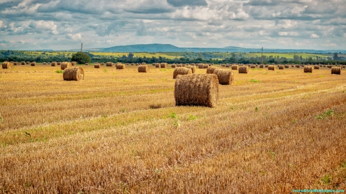 Hay Rolls, Hay, Rolls, Field, Agriculture, Farming, Cultivation, Harvesting, Landscape, Nature, Scene, Scenery,Hay Rolls In Field, Hay Rolls, Hay, Rolls, Field, Agriculture, Farming, Cultivation, Harvesting, Landscape, Nature, Scene, Scenery, Nature Wallpapers, Latest, HD, Wallpapers, Download, IC2644